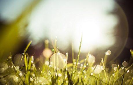 דשא סינטטי לבית – עשה זאת בעצמך